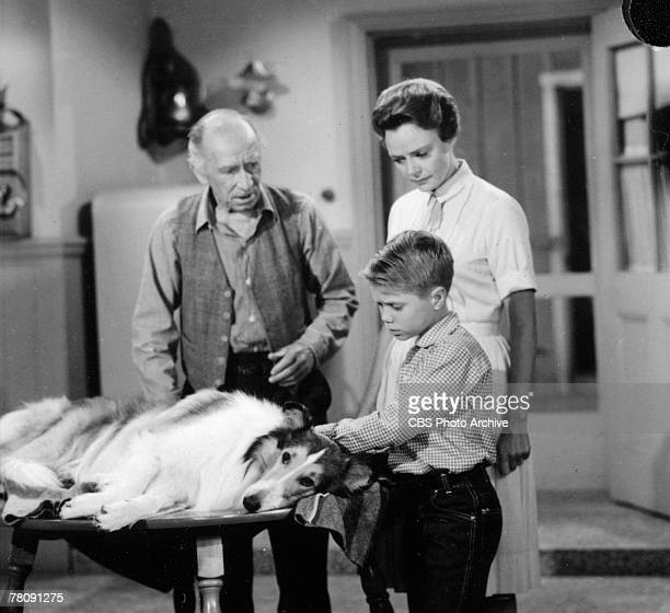 Television still of Scottish actor Andy Clyde as Cully Wilson and American actors June Lockhart as Ruth Martin and Jon Provost as Timmy as they fret...