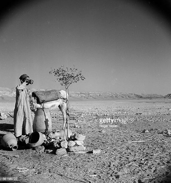 Tell el Amarna Watering place in the desert 1954