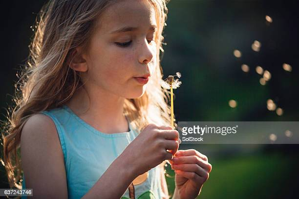 Telling the time with Dandelions