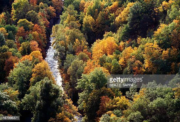 Temperate deciduous forest in autumn Durance river around Briancon ProvenceAlpesCote D'Azur France