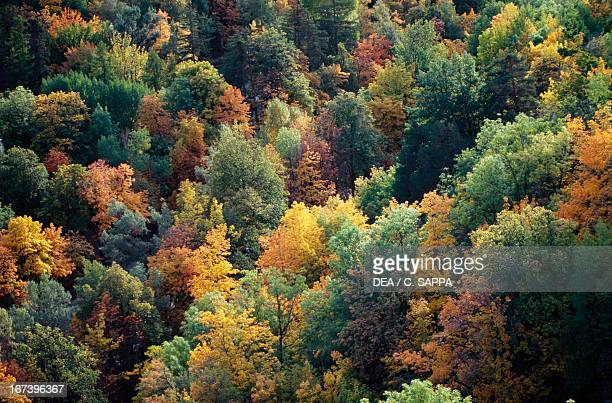 Temperate deciduous forest in autumn ProvenceAlpesCote D'Azur France