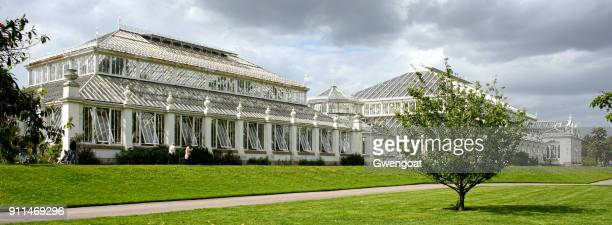 temperate house in kew gardens - richmond upon thames stock pictures, royalty-free photos & images