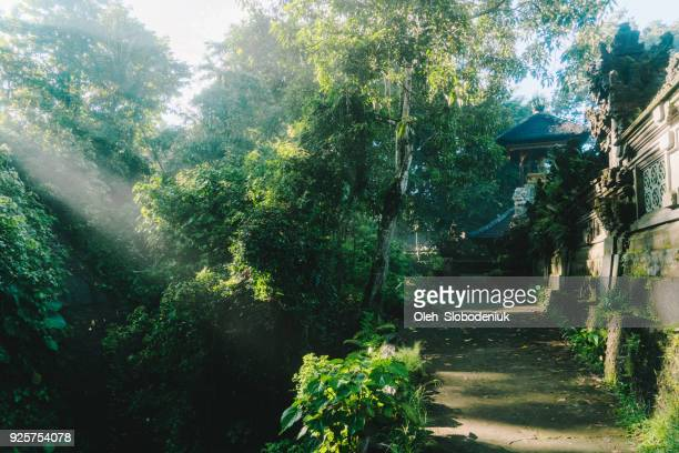 temple in rainforest in bali in morning light - balinese culture stock pictures, royalty-free photos & images