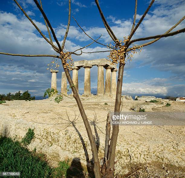 Temple of Apollo ca 540 BC with a tree in the foreground ancient city of Corinth Peloponnese Greece Greek civilisation 6th century BC