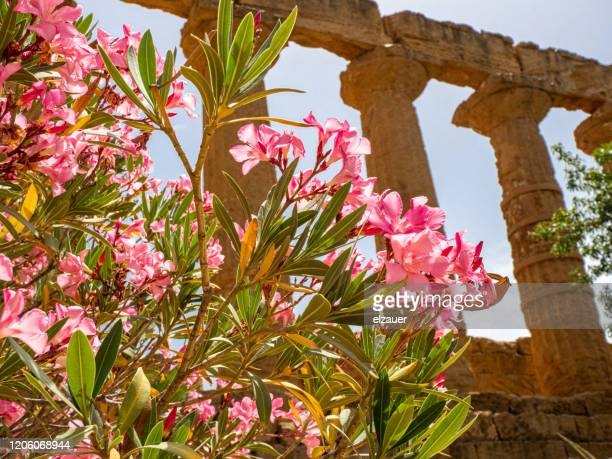 temple of june - agrigento stock pictures, royalty-free photos & images