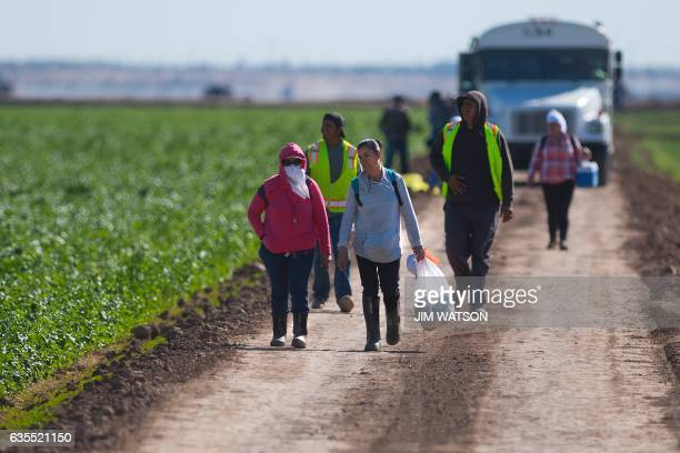 Temporary agricultural workers walk off a lettuce farm at the end of their shift outside Yuma Arizona on February 15 2017 Attention Editors this...