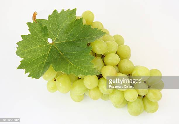 tempting, ripe green grapes with leaf. - white grape stock photos and pictures