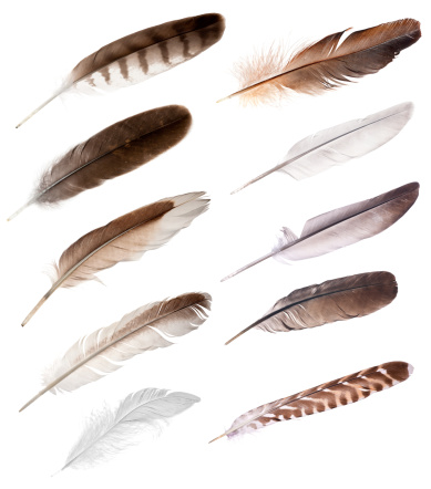 ten feathers from different birds 134099871