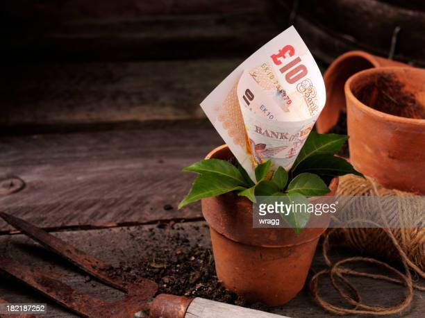 ten pound growing in a plant pot - money tree stock photos and pictures