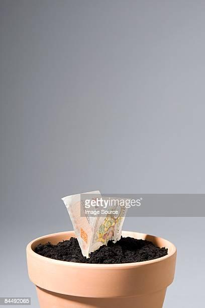 ten pound note growing from pot - nota de dez pounds - fotografias e filmes do acervo