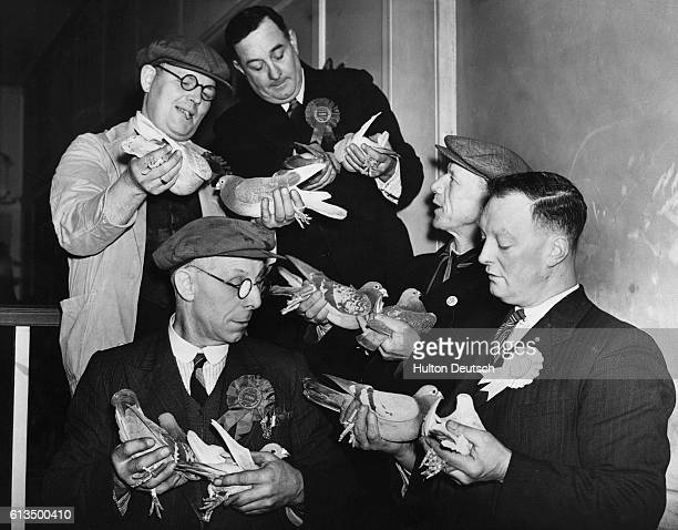 Ten racing pigeons which took part in the Battle of Britain at a charity exhibition for 'Aid to Russia Fund' at Walworth England 1942 | Location...