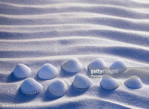 Ten Seashells