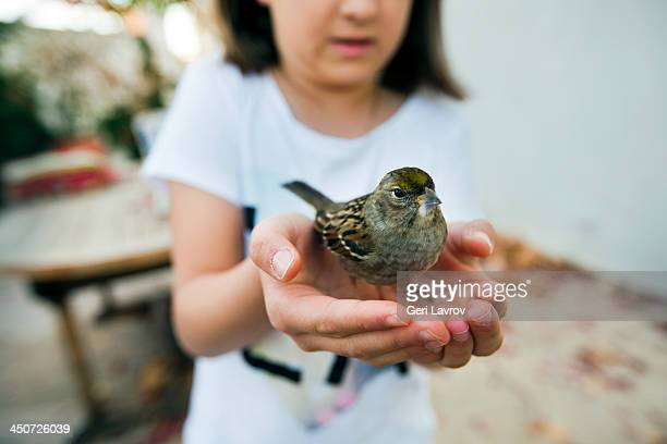 Ten year old girl holding a house sparrow