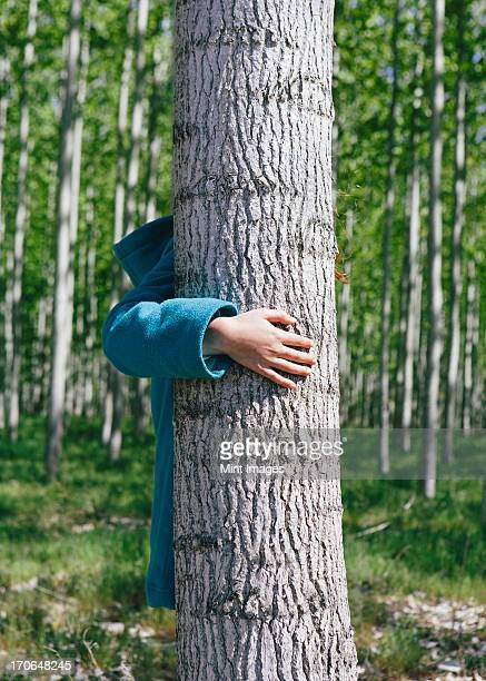 Ten year old girl standing behind commercially grown poplar tree on large tree farm, near Pendleton