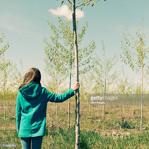 ten year old girl standing next to commercially grown poplar tree on large tree farm, near pendleton, oregon. - deciduous tree stock pictures, royalty-free photos & images