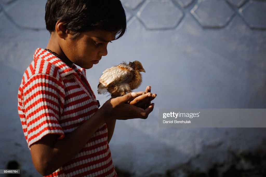Ten year old Nawab Mian, suffering from mental illness related to the 1984 Bhopal gas disaster, plays with a small chick near the site of the deserted Union Carbide factory on November 28, 2009 in Bhopal, India. Twenty-five years after an explosion causing a mass gas leak, in the Union Carbide factory in Bhopal, killed at least eight thousand people, toxic material from the 'biggest industrial disaster in history' continues to affect Bhopalis. A new generation is growing up sick, disabled and struggling for justice. The effects of the disaster on the health of generations to come, both through genetics, transferred from gas victims to their children and through the ongoing severe contamination, caused by the Union Carbide factory, has only started to develop visible forms recently.