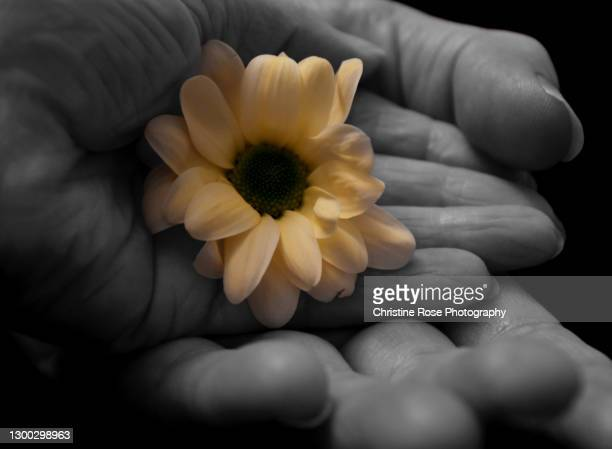 tenderness - color manipulation stock pictures, royalty-free photos & images