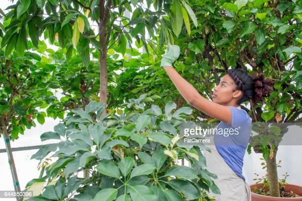 Tending to a Tropical Tree