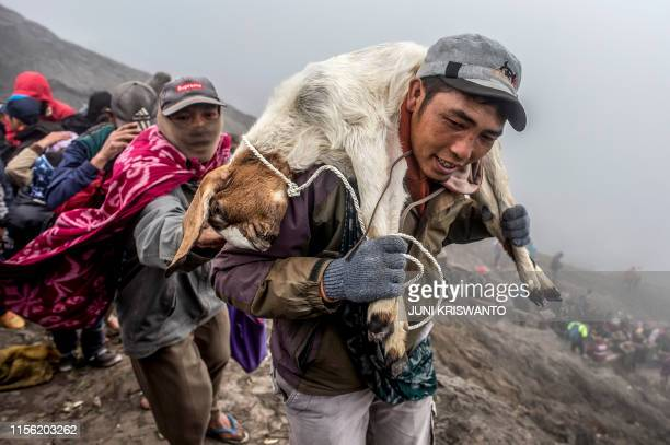 Tengger tribe member carries a goat to the summit of Mount Bromo volcano as an offerings in Probolinggo, East Java province on July 18 as part of the...