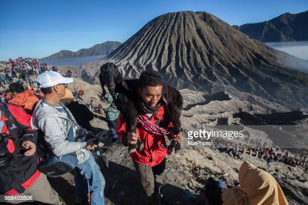 Tenggerese carrying a goat for the ceremony of Yadnya Kasada Festival at Mount Bromo Probolinggo East Java on 30th April 2018 The Yadnya Kasada is a...