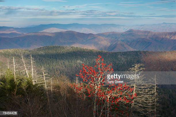 usa, tennessee, great smoky mountains national park, clingman's dome - clingman's dome - fotografias e filmes do acervo