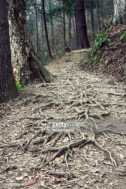 USA, Tennessee, Great Smoky Mountains National Park, Path in forest