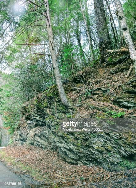 Tennessee Smokey Mountains