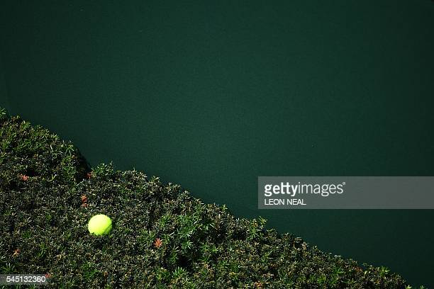 A tennis ball is seen from above on the top of a hedge alongside a court on the ninth day of the 2016 Wimbledon Championships at The All England Lawn...