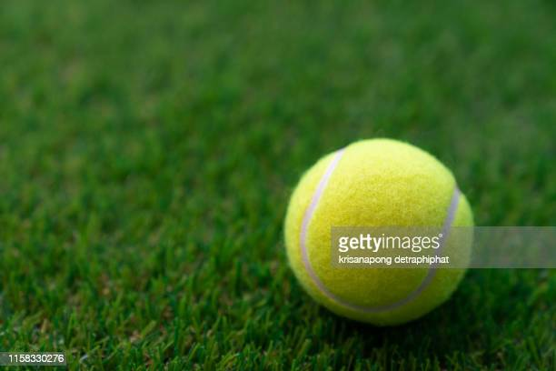tennis ball on a green background,tennis - tennis racquet stock pictures, royalty-free photos & images