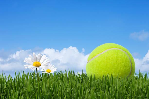 Tennis Ball Wall Art