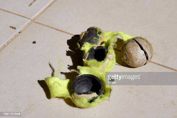 tennis balls destroyed by the dog. - destruction stock pictures, royalty-free photos & images