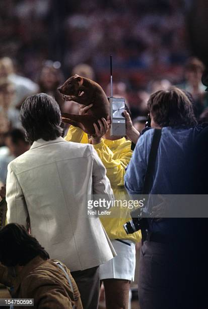 Battle of the Sexes Bobby Riggs holding up a piglet after losing match to Billie Jean King at Astrodome Houston TX CREDIT Neil Leifer