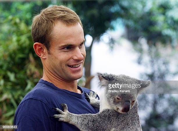 Tennis player Andy Roddick of the USA takes time out from the Brisbane International 2010 to hold a Koala at the Lone Pine Koala Sanctuary on January...