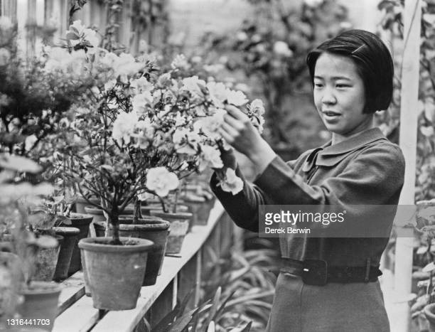 Tennis player Gem Hoahing of then British Hong Kong tends to flowers in the greenhouse of her home on 30th March 1938 in Twickenham, London, England.