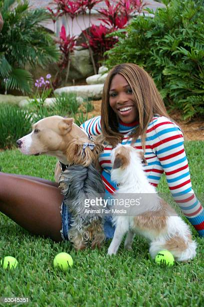 Tennis Player Serena Williams photographed with her dogs, a Staffordshire named Bambi and a Jack Russell named Jackie on May 31, 2005 at her home in...
