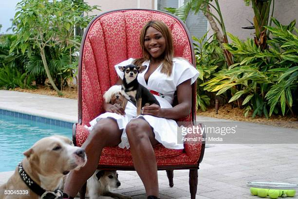 Tennis Player Serena Williams poses with her pet dogs, a Staffordshire named Bambi and a Jack Russell named Jackie on May 31, 2005 at her home in...