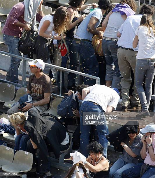Tennis spectators are disturbed as bees swarm around them at the MonteCarlo ATP Masters Series Tournament tennis match on April 13 2009 in Monaco AFP...