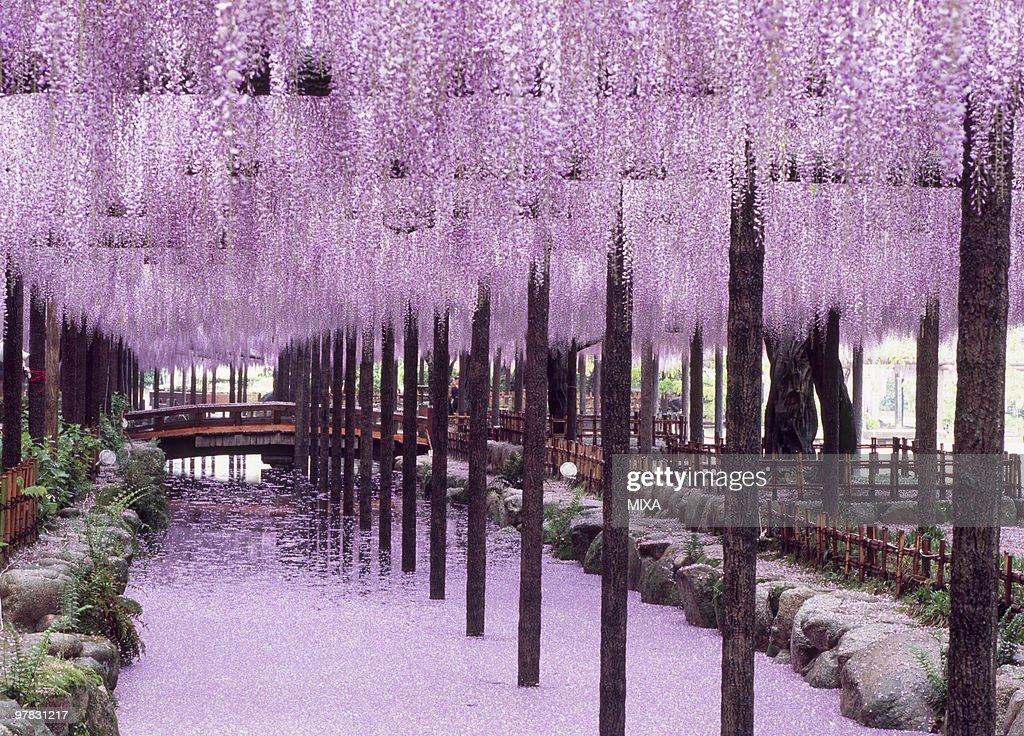 Tennogawa Park, Tsushima, Aichi, Japan : Stock Photo