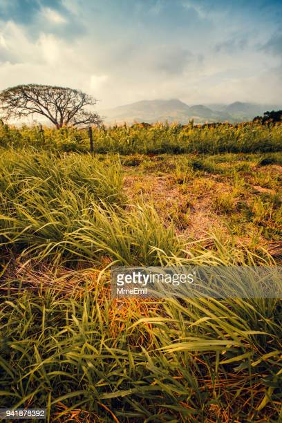 volcan tenorio area, costa rica nature, paysage - guanacaste photos et images de collection