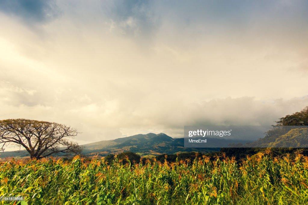 Volcán Tenorio área, Costa Rica naturaleza, paisaje : Foto de stock