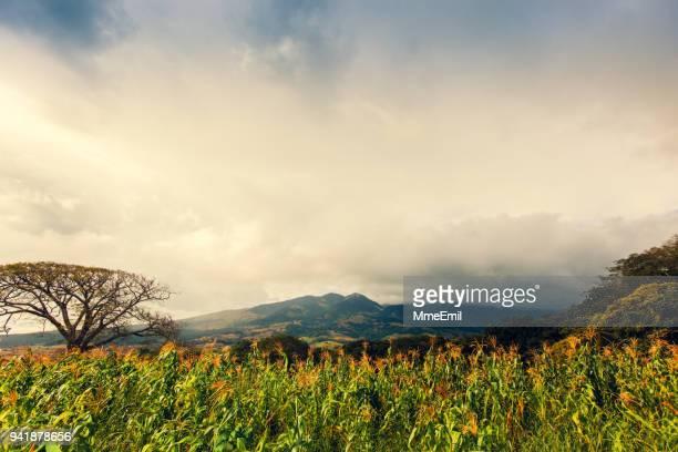 tenorio volcano area, costa rica nature, landscape - guanacaste stock pictures, royalty-free photos & images