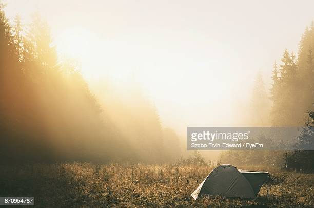Tent Amidst Plants Against Trees In Forest During Foggy Weather