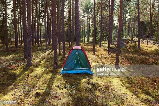 tent at campsite in forest - tält bildbanksfoton och bilder