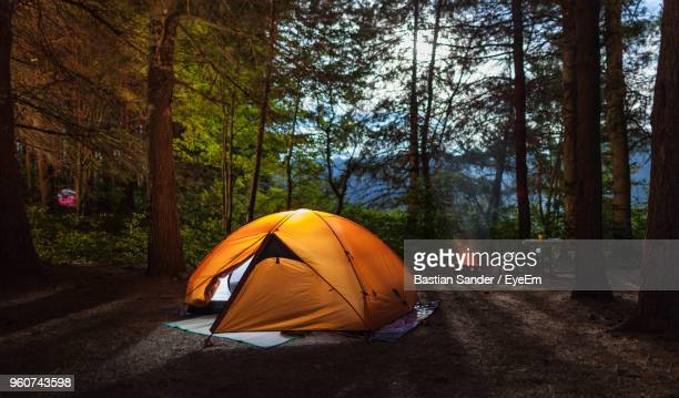 tent at forest - camping stock pictures, royalty-free photos & images