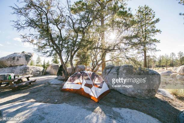tent by rocks and trees on hill during sunny day - big bear lake stock pictures, royalty-free photos & images