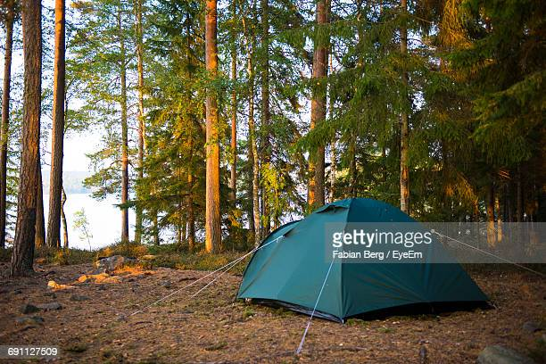 Tent By Trees In Forest
