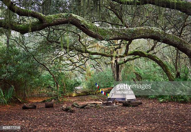a tent in a backcountry campsite under the branches of beautiful live oaks with prayer flags on the side. - cumberland usa - fotografias e filmes do acervo