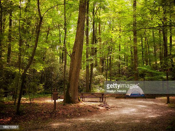 tent in the woods - state park stock pictures, royalty-free photos & images