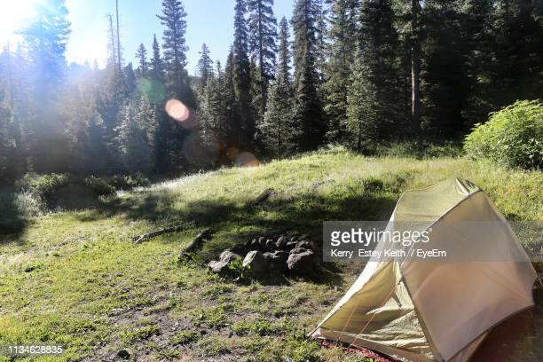 tent on field against trees - kerry estey keith stock photos and pictures