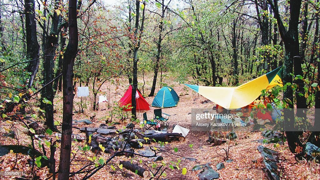 Tents In Forest : Foto stock